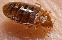 The Growing Bed Bug Problem Image