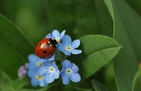 Love Bugs: Which Bugs, Bees, & Beetles Are Good For My Garden? Image