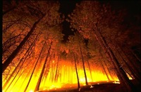Drought Season Tips for Wildfire Prevention Image