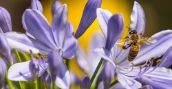 Allergy Season Is Here, Can Regular Pest Control Help? Image