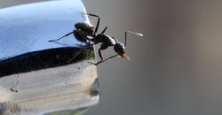 Ants Inside? What You Need To Know Image